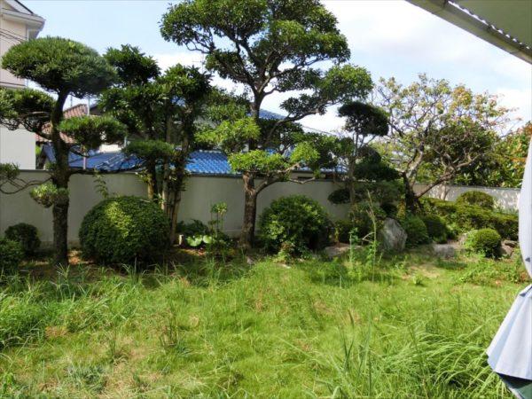 雑草の生い茂った庭
