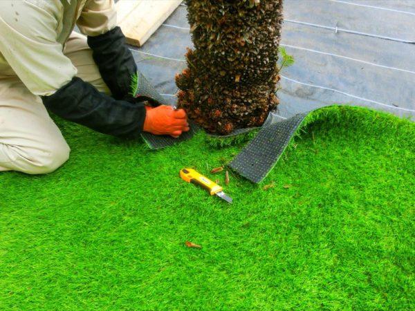 ソテツの根元は丁寧に人工芝をカットしている画像
