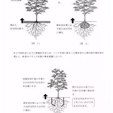 植木を移植するための「根回し」とは?